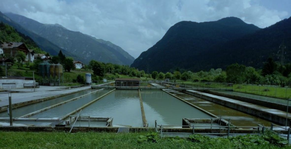 "Anfaco-Cecopesca forma parte del proyecto GAIN, ""Green Aquaculture Intensification in Europe""."